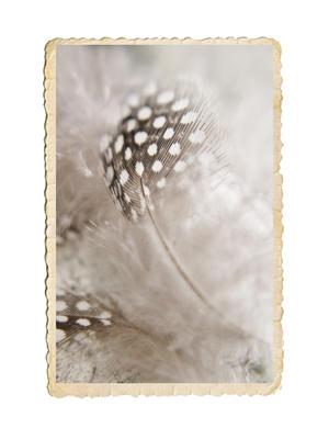 Pärlhöns fjädrar