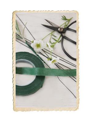 Rulle floratjep, grön