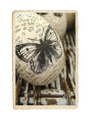 Fjärilsägg